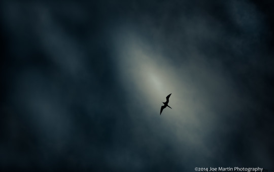 Photo of a silhouette of the underside of a bird in flight