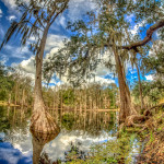 Photo of Florida swamp.