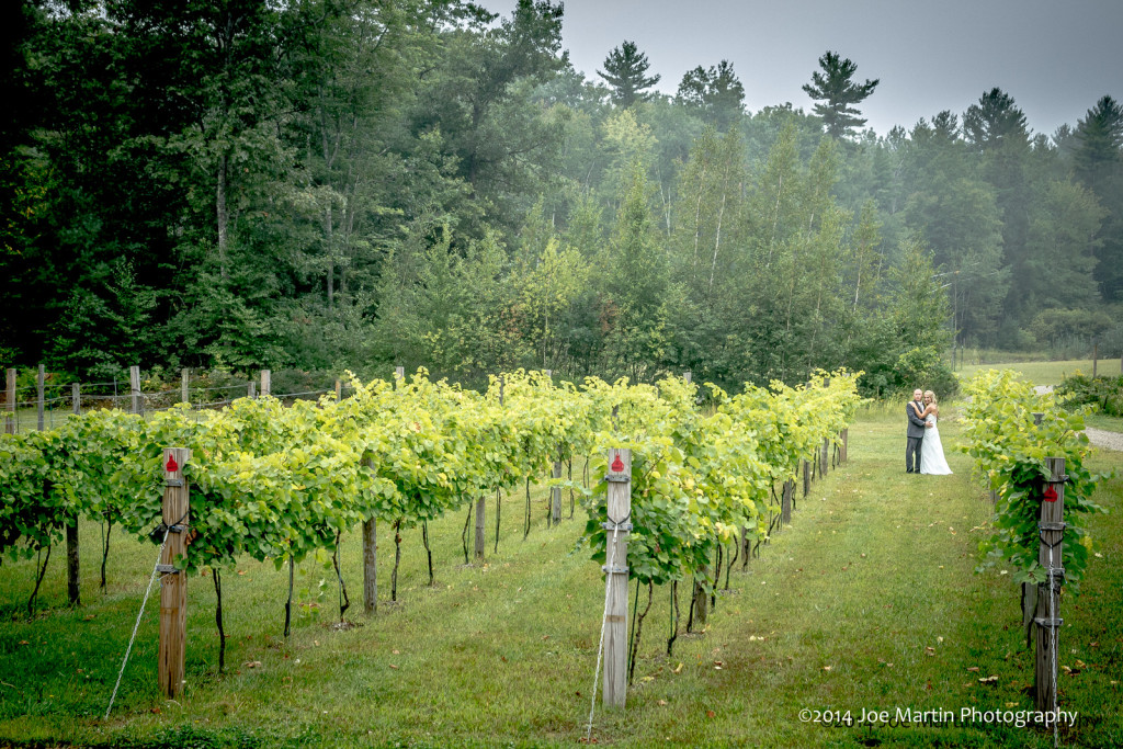 Photo of a bride and groom in the vineyard at the New Hampshire wedding venue Zorvino Vineyards