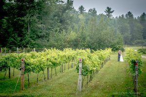 fine art wedding photo taken at the New Hampshire wedding venue Zorvino Vineyards